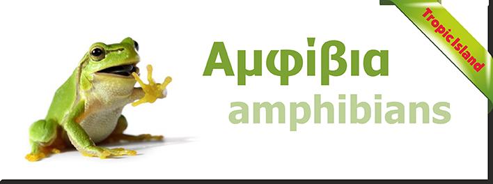 amfivia
