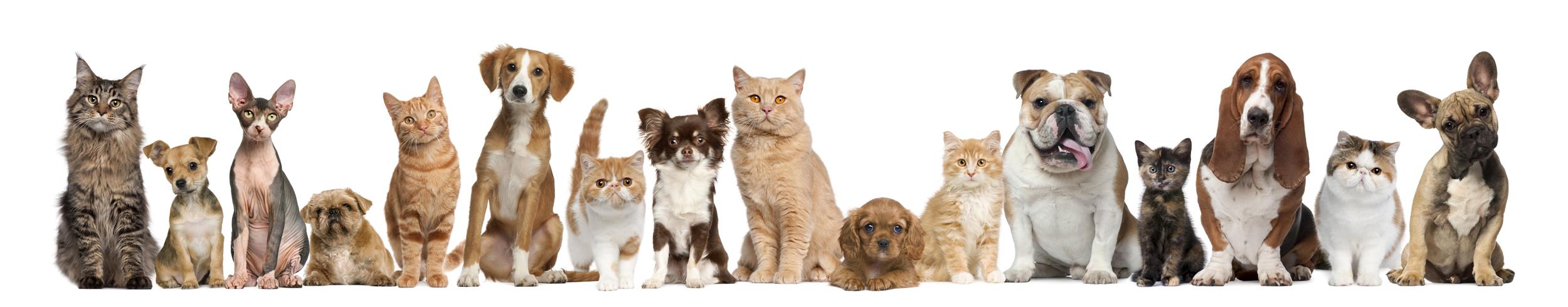 Gruppo di cani e gatti di fronte a sfondo bianco